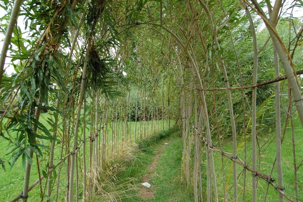 Фото живая изгородь из ивы своими руками