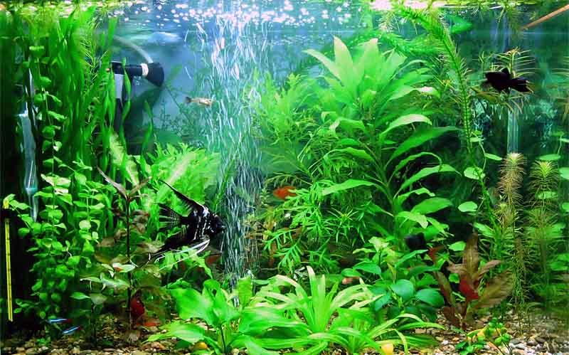 Компрессор для аквариум