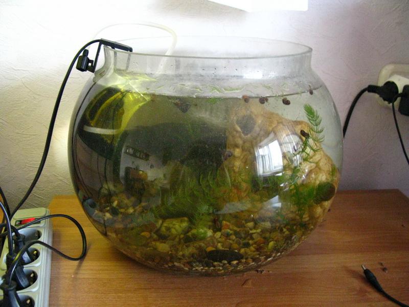Сделать кислород для аквариума своими руками