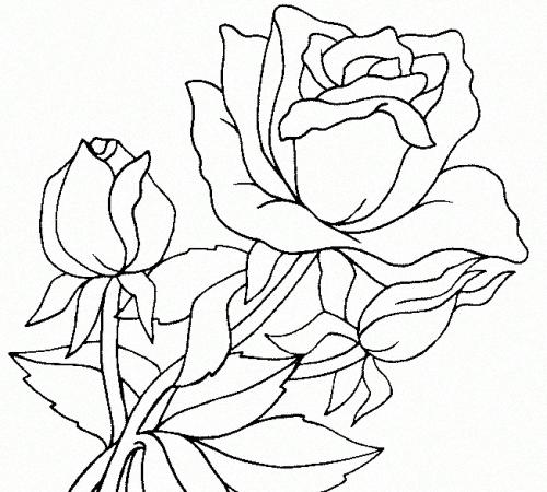 raskraski-rose-7