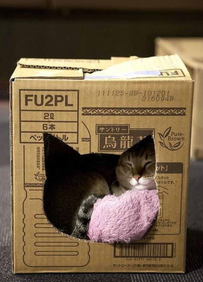 Коробка для кошки своими руками фото
