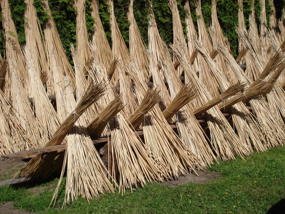 Когда заготавливать лозу ивовую для плетения